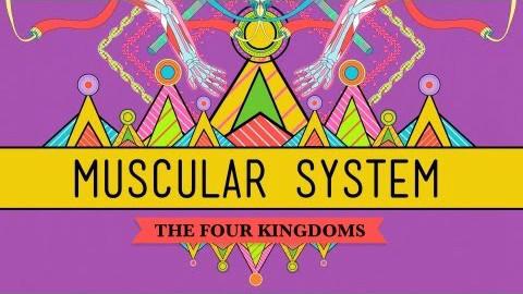 【10分钟速成课:生物学】第31集 - 大块头!肌肉系统