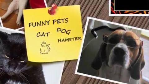 【NIKI丶】 这些猫猫狗狗和小动物一定能让你开心!