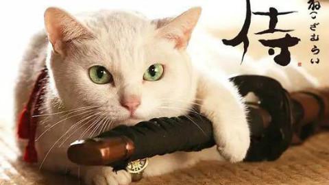 【日本】岩合光昭の猫步走世界 日语中字 720P