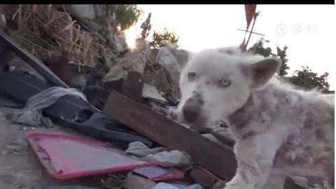 拯救被抛弃在垃圾桶边的哈士奇