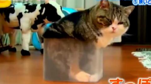 猫咪的8种迷之行为~哈哈好萌~~~