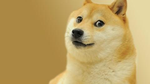 【丧病精污向拼图】Doge图片MS Jigsaw 216块拼图