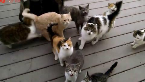 一位网友出门时看到门口有只猫,就给了点吃的。然后第二天当他打开门时。。