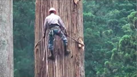 厉害!见过砍树,可是没见过如此砍树的。