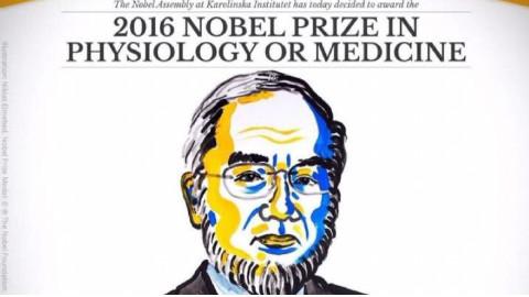 【科学新闻联播】S01E006 2016年诺贝尔生理学或医学奖
