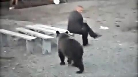 战斗民族不是盖的:毛子与熊日常