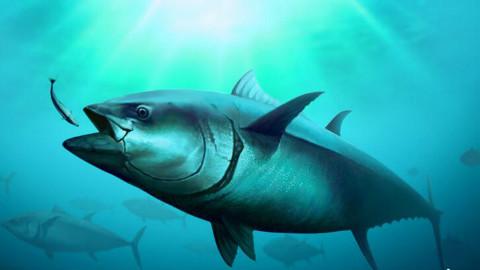 国家地理-纪录片-720P-黑鲔鱼殊死战-1-2出师不利