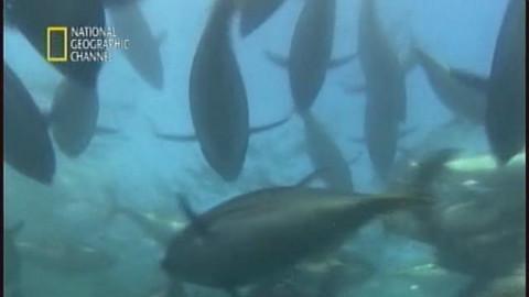 纪录片-危险工作-金枪鱼牛仔