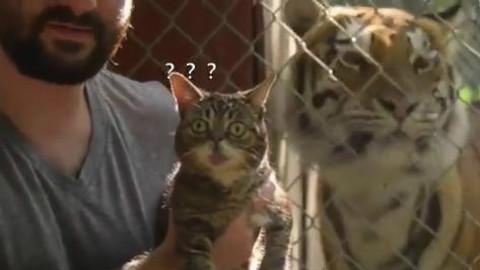 铲屎官带喵星人去动物园看老虎!喵喵一脸懵逼
