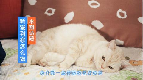 新猫到家,该怎么做?【宠医有料08期】