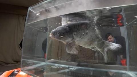 【液氮实验】把活鱼扔进液氮里,然后捞出来