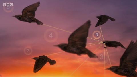 【纪录片】空中生灵 第三集 拥挤的天空【双语特效字幕】【纪录片之家爱自然】
