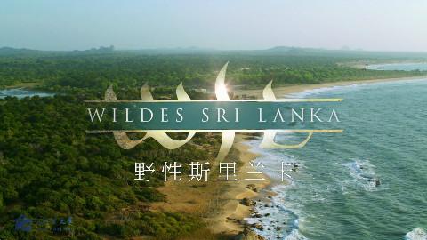 【国家地理】野性斯里兰卡 第3集【双语字幕】【纪录片之家爱自然】