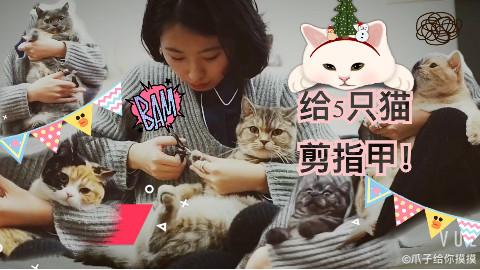 喵,给5只猫剪指甲!| 爪子给你摸摸
