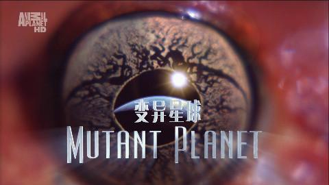 【星球频道】变异星球第一集新西兰【1080p】【双语特效字幕】【纪录片之家爱自然】