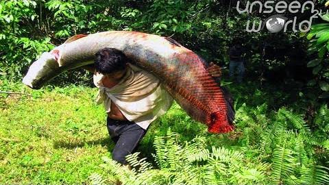 看老外如何野外钓大鱼,个头真是大啊