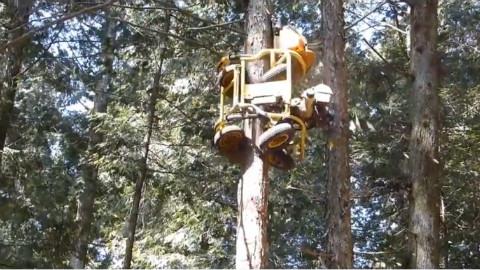 这个日本的机械能爬十几米高的树,脑洞太大!