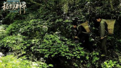 【广东卫视】《秘境神草》04-05
