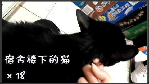 【宿舍楼下的猫】×18