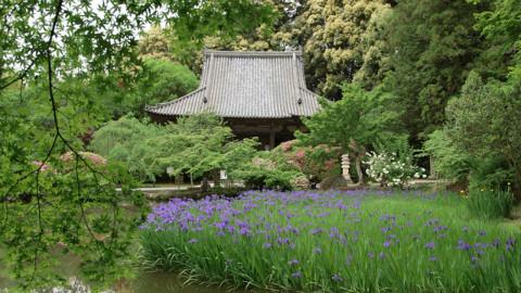纪录片.NHK.旅游日本.奈良市:静谧寺院.繁花似锦.2016[高清][生肉]