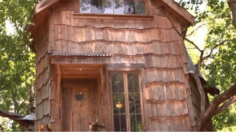 在自家后院建个树屋