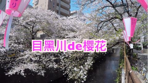 今年的日本樱花季【SAKURA&YURI】
