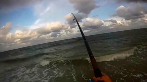 早起的鸟儿有虫吃,早起的渔夫钓鲨鱼