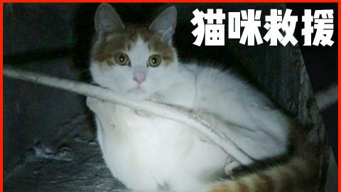 危急救援!堕入20米深井的绝望猫咪,求你们不要再散养了!