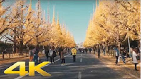 【東京・外苑前/紅葉】4K 漫步在东京 外苑前/红叶 20161125