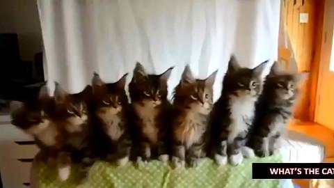 【喵星人呆萌场面大合集】看看猫咪喵星人开爱的呆萌瞬间.......