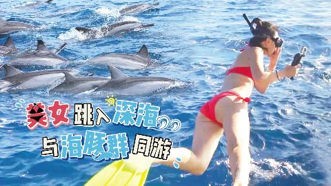 毛里求斯海豚湾,美女身着比基尼与海豚群同游,速度惊人!