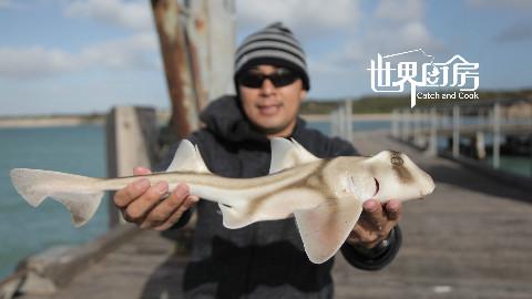 光哥自制笼子捕螃蟹,海钓收获呆萌小鲨鱼