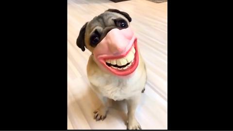 【萌到你全身酥软的汪星人】可爱萌宠狗狗..........