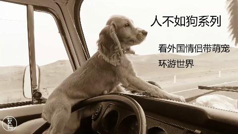 外国情侣带着狗环游世界,看完感觉活到现在不如一只狗!好气啊!