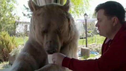 狗熊和战斗民族的聚餐  熊:嗯~嗯~好吃!好吃!真好吃!!再给我来一块