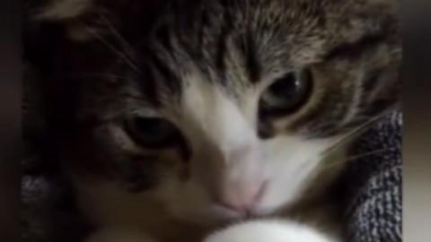 全网叫声最嗲的一只猫咪,心都萌化了