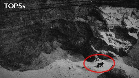 五个已经灭绝的动物留下的珍贵影像资料@柚子木字幕组