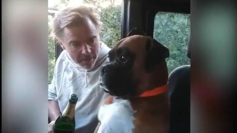 国外一网友老爸喝醉后,对着自家的狗讲酒驾危害,狗狗一脸懵逼的表情