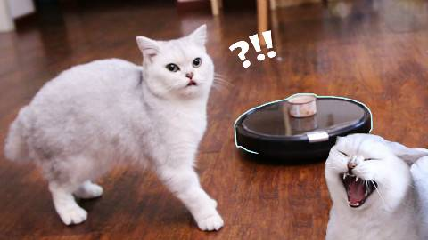 当扫地机器人遭遇逗比猫咪,被玩弄沦为逗猫玩具,有钱真的可以为所欲为!