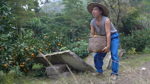 我摘几个橘子去,你们就在此地,不要走动@野食小哥