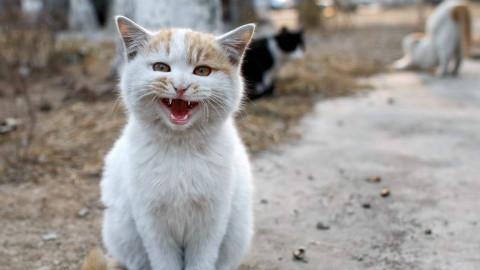 我们在有5000只流浪狗的山上,救出了一只猫咪