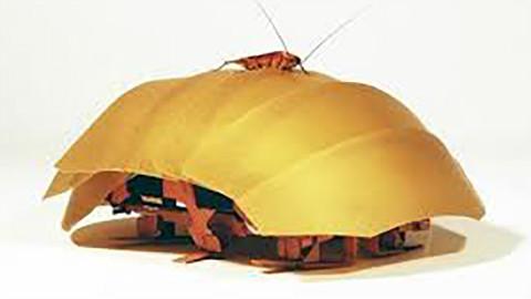 蟑螂到底可以挤压到什么程度?你家的墙缝该检查一下了