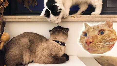 【每日吸猫】!!这里是喵星的一天!萌叽叽~