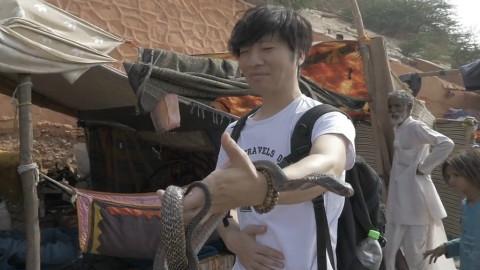 【大明的旅行】 吓尿了,印度纯种剧毒眼镜蛇,耍这么一下花了一百元人民币