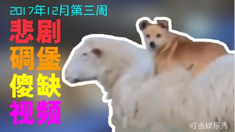 悲剧碉堡傻缺视频【2017年12月第三周】
