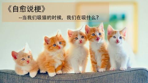 【自愈说梗】当我们吸猫的时候,我们在吸什么?