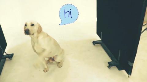 新犬演员的诞生之专业say hi