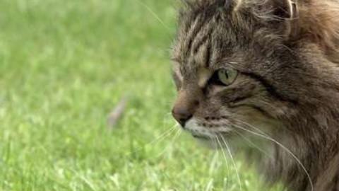 猫的秘密生活 The Secret Life of the Cat(HD中英双字1024高清)
