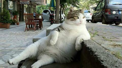 猫咪和人类在一起,搞笑合集。