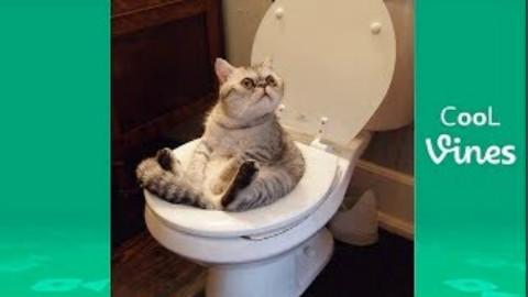 尽量不要笑挑战-猫狗搞笑集锦